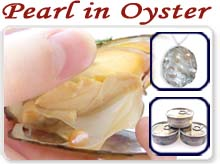 pearl in oysters