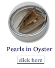pearls in oysters