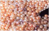 pearl-grading-loose
