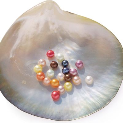 Purple, Pink, White, Red, Mauve, Black, Orange, Yellow, Light Green and Chocolate 4-5mm Half-Drilled AA Button Pearl