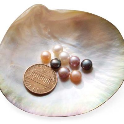 White, Pink, Mauve and Black 6-7mm AAA Quality Button Pearl, Half Drilled