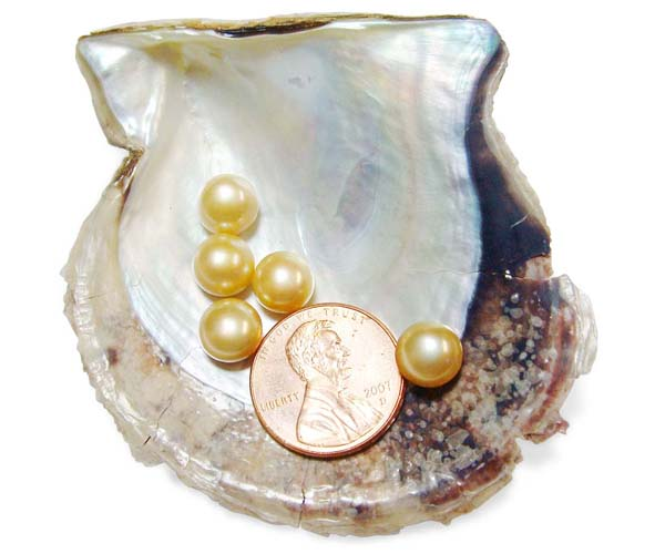 Champagne 8-8.5mm AAA Quality Button Pearl, Half Drilled