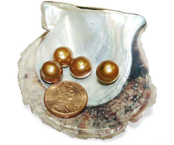 Dark Golden 10-11mm AAA Quality Button Pearl, Half Drilled