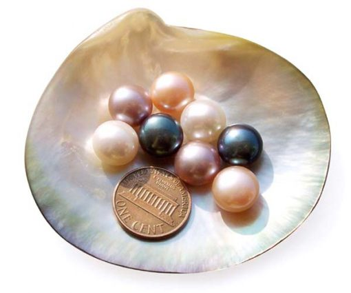 White, Pink, Mauve and Black 11-12mm AAA Quality Button Pearl in Half Drilled