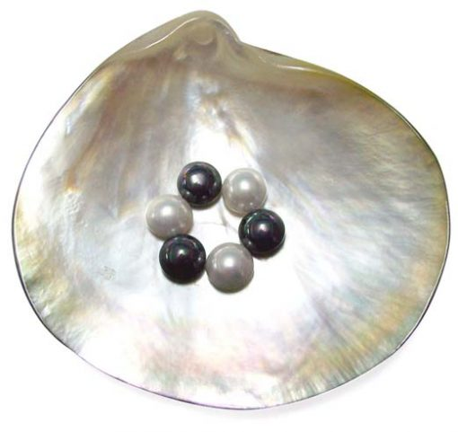 White and Black 8mm Mabe Shaped SSS Pearls , Half-drilled