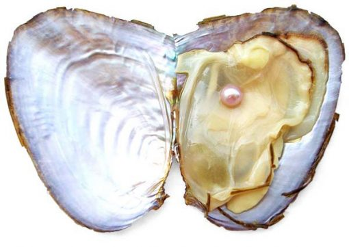 Mauve 5-6mm Preserved Pearl Oyster with Very Round Pearl