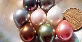 13x16mm Shell Pearls